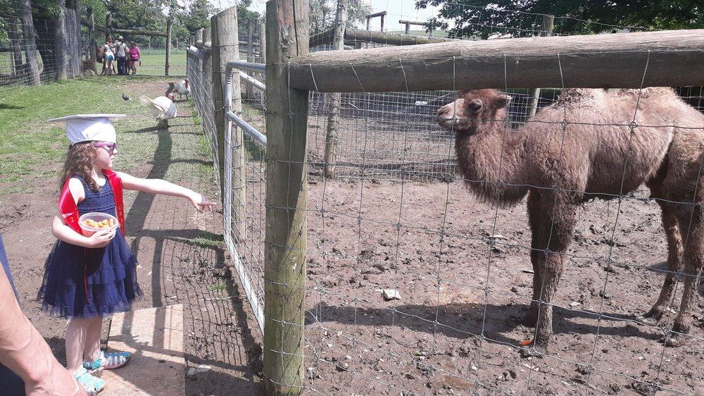 Critter Country Animal Farm: 914 Rt 981, Smithton, PA