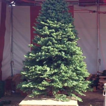 Christmas Trees at The O.C. Fairgrounds - 19 Reviews - Christmas ...