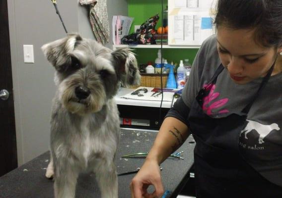 Ollu dog wash grooming salon 1600 marshall st ne minneapolis mn ollu dog wash grooming salon 1600 marshall st ne minneapolis mn pet grooming mapquest solutioingenieria Images