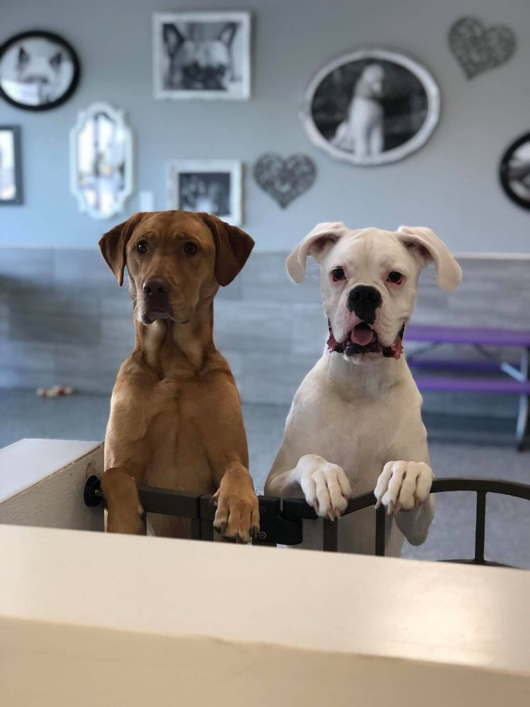Christy's Pampered Pet Spa: 11812 S 25th St, Bellevue, NE