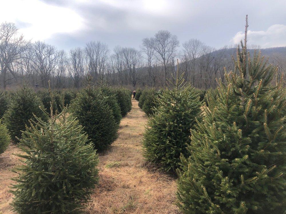 Evergreen Valley Christmas Tree Farm