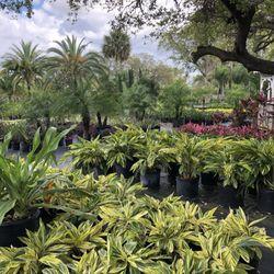 Photo Of Palm Gardens Nursery Orlando Fl United States