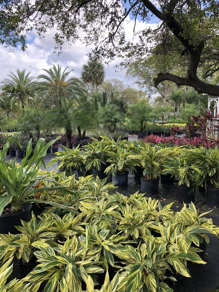 8 Photos For Palm Gardens Nursery