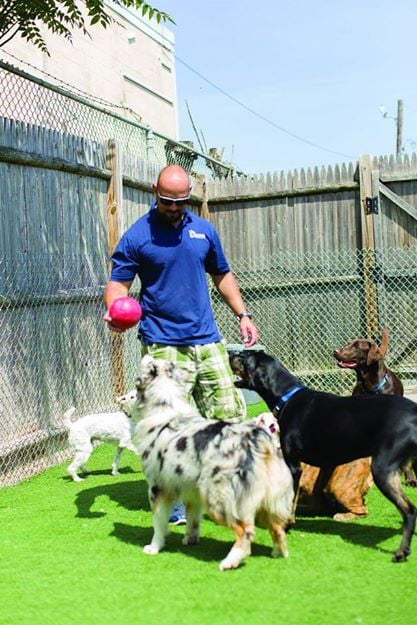 Toureen Pet Resort And Spa Watertown Ma