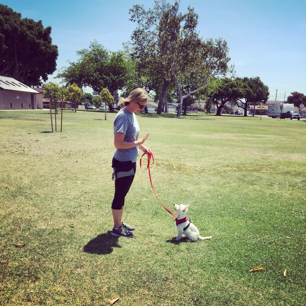 Oc Paws Dog Training
