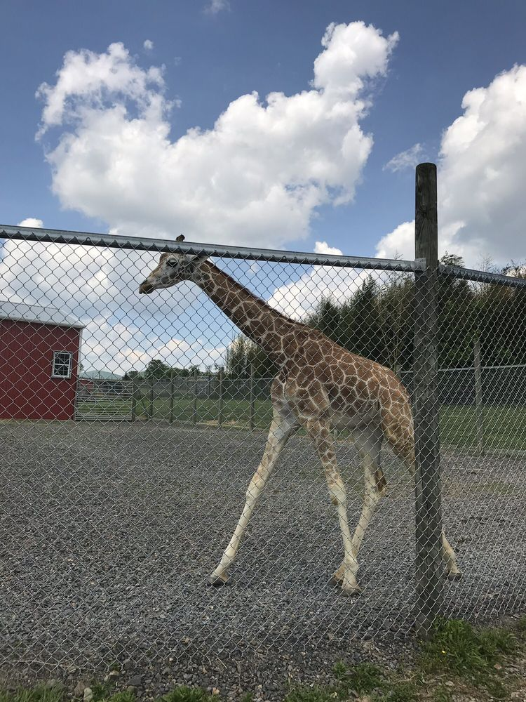 Fort Chiswell Animal Park: 569 Red Hollow Rd, Max Meadows, VA