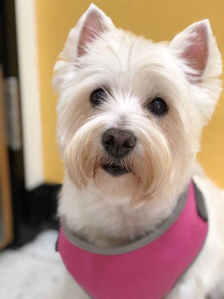 Happy & Love Mobile Pet Grooming: Diamond Bar, CA