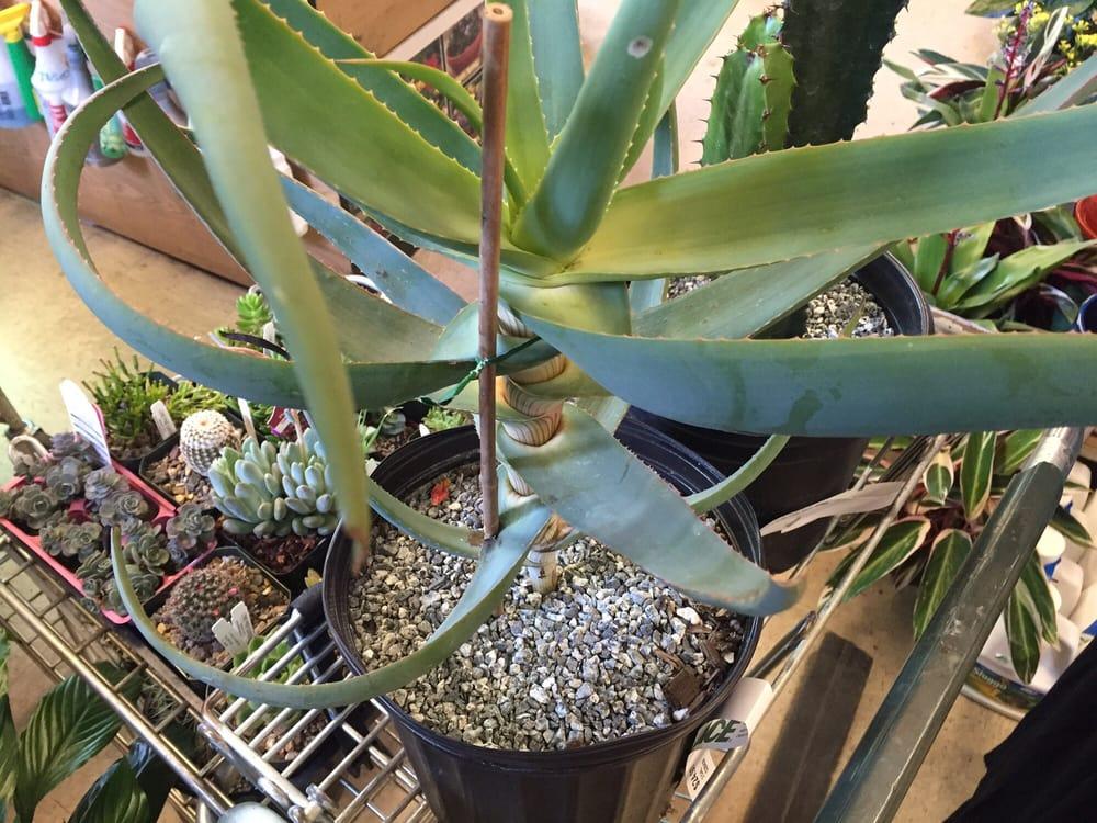 Grand Lake Ace Hardware Nursery 19 Photos 69 Reviews Nurseries Gardening 4001 Grand