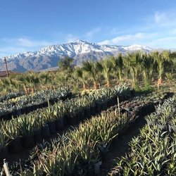 Gdnc Cactus Desert Plant Nursery