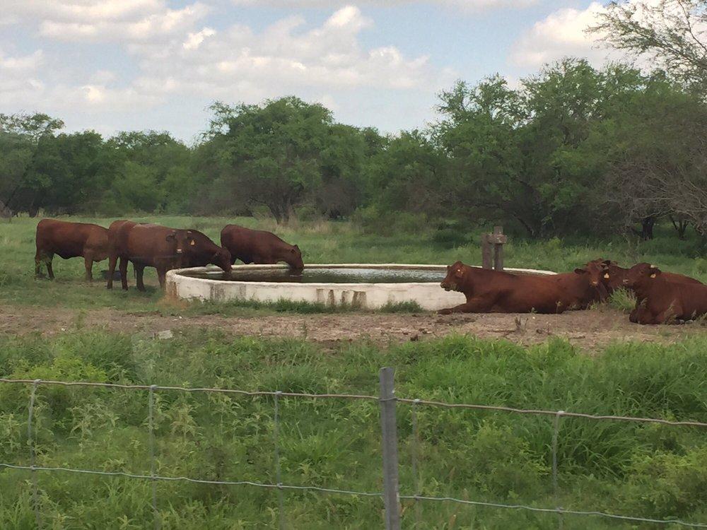 King Ranch: Hwy 141, Kingsville, TX
