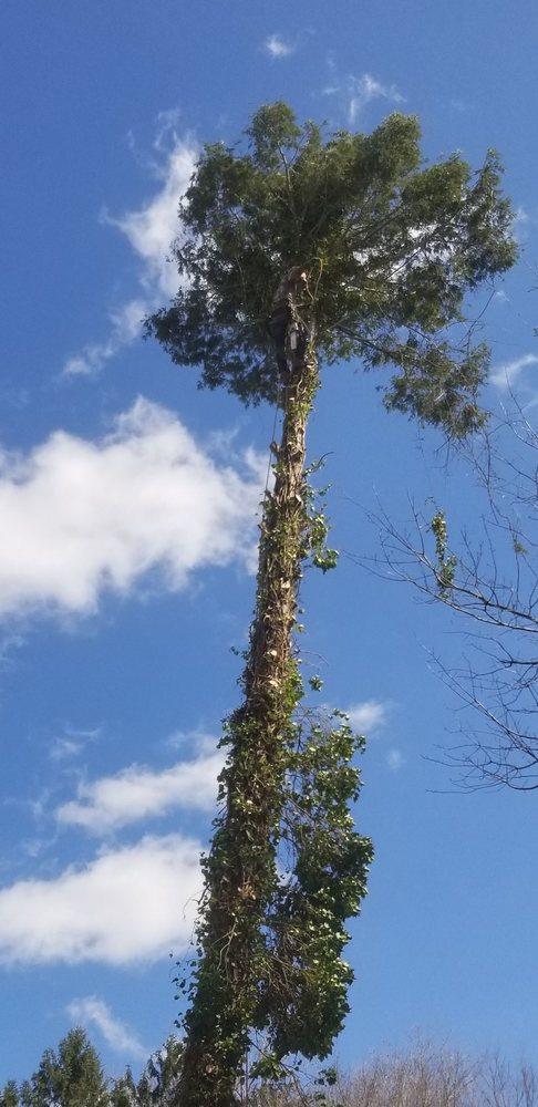 Tarzan Tree Service: Eagleville, PA