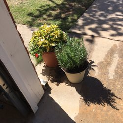 Pam S Plants Nurseries Gardening 211 Ellison Ave Oklahoma City Ok Phone Number Yelp