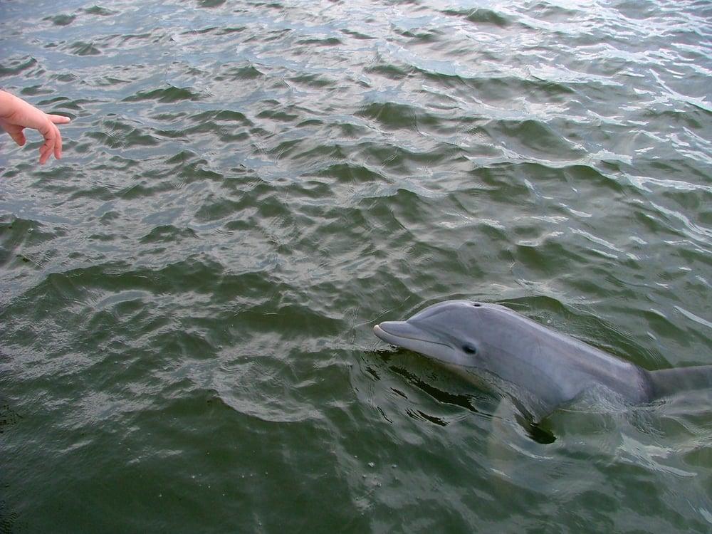 Bull River Cruises: 36 Wilmington Island Rd, Savannah, GA