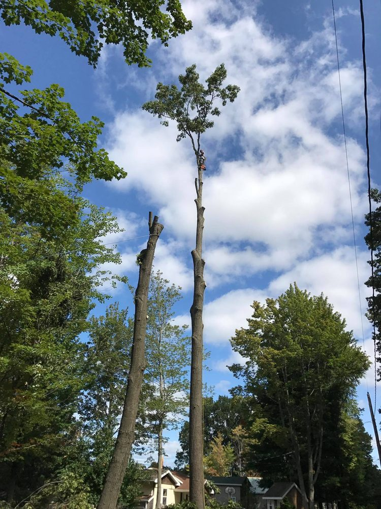 Nature's Choice Tree Management: Mount Pleasant, MI