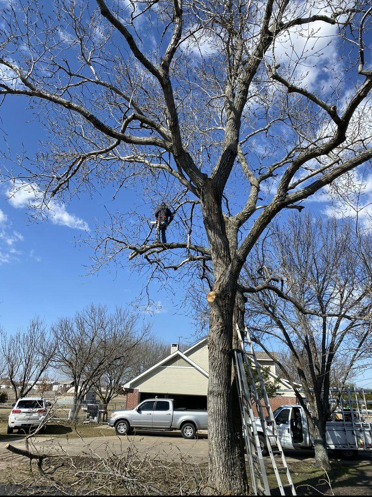 Elian's Tree Service: Kaufman, TX