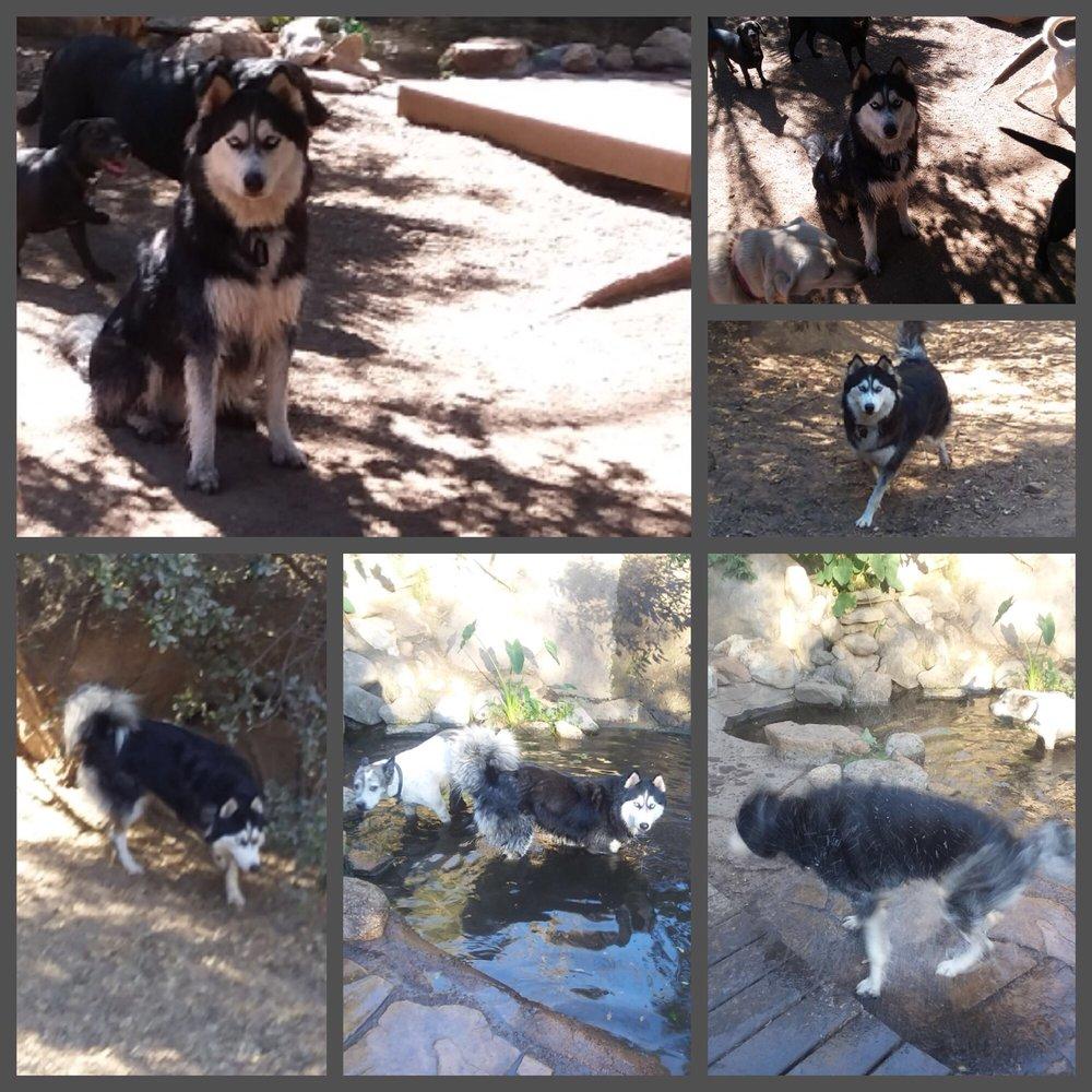 Alpine Dog Ranch: Alpine, CA