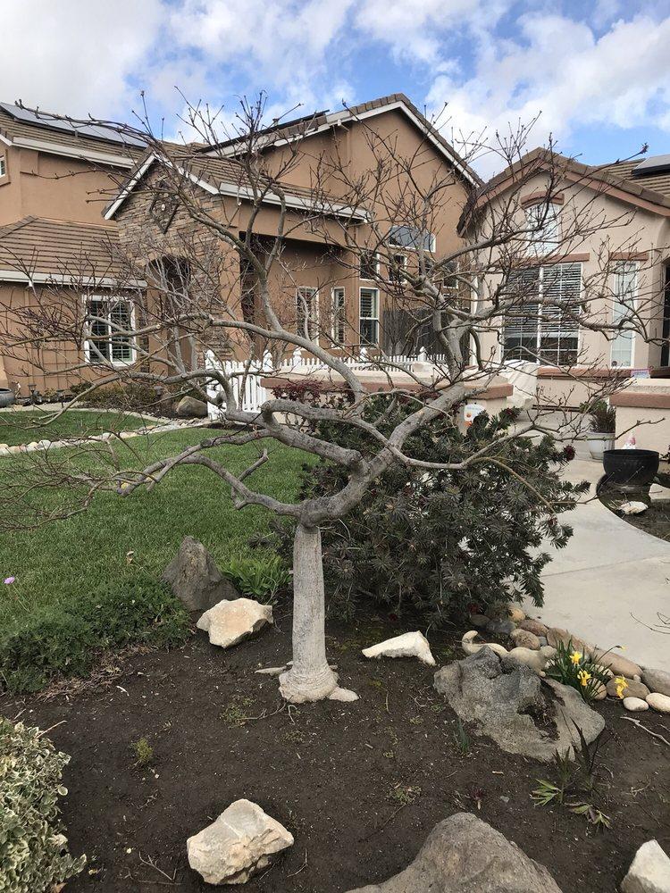 Acampo Tree Service: Victor, CA