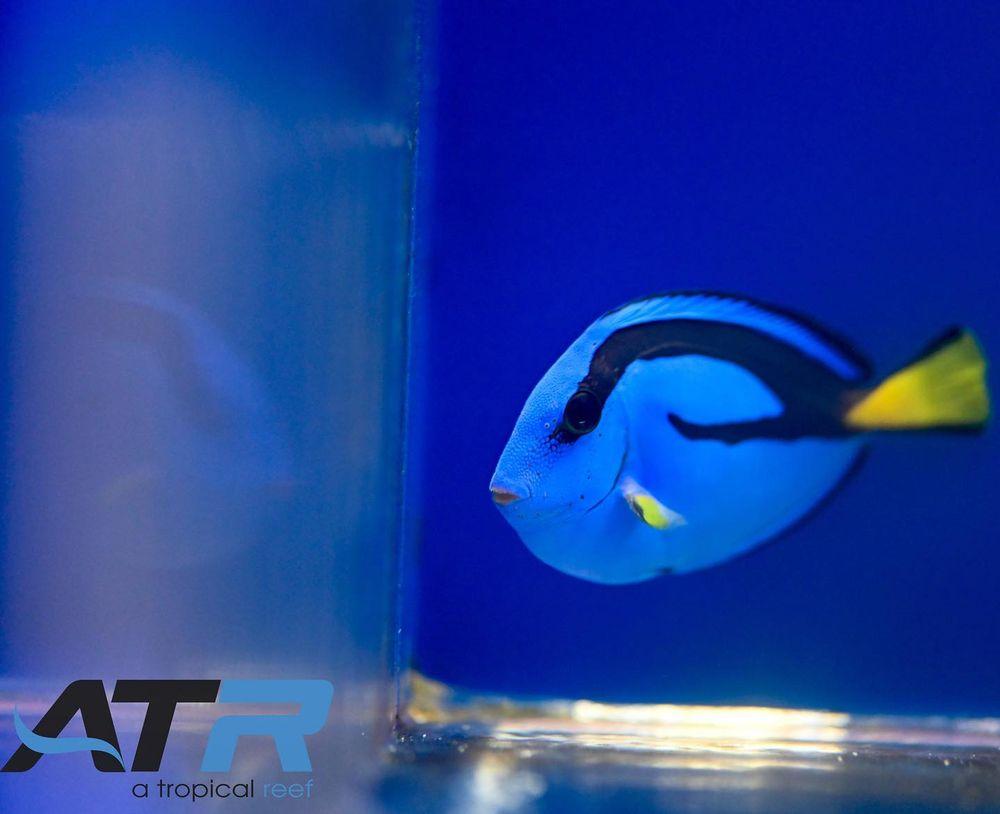 A Tropical Reef: 9425 Ulmerton Rd, Largo, FL