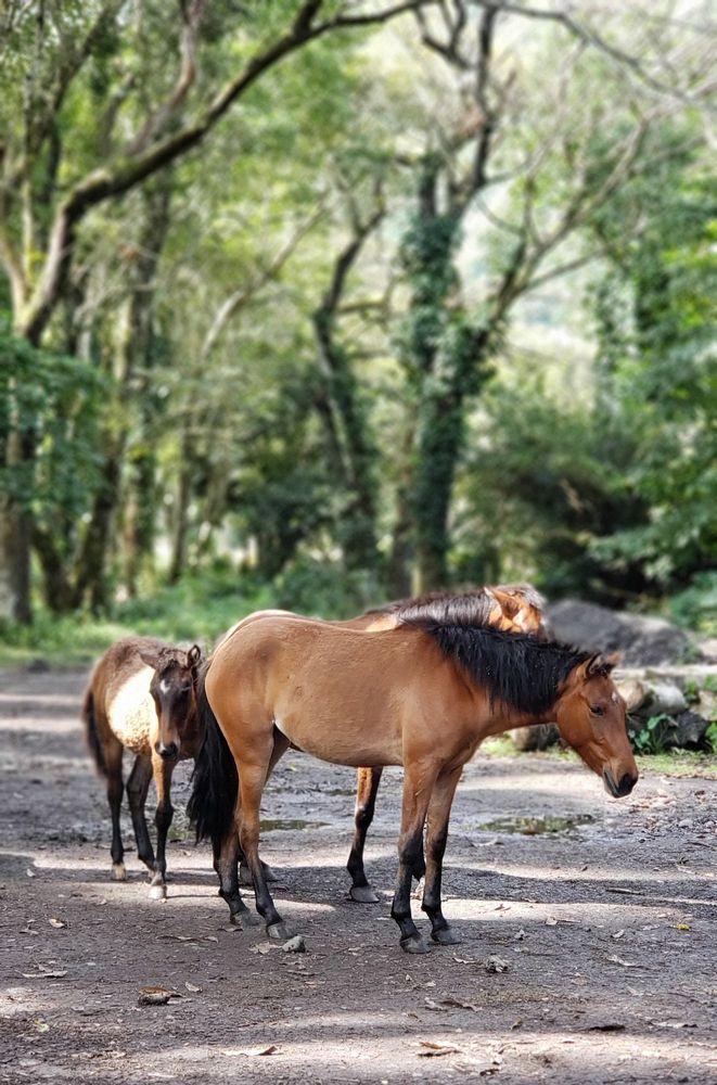 Waipi'o On Horseback: Hwy 240 Mm 7, Honokaa, HI