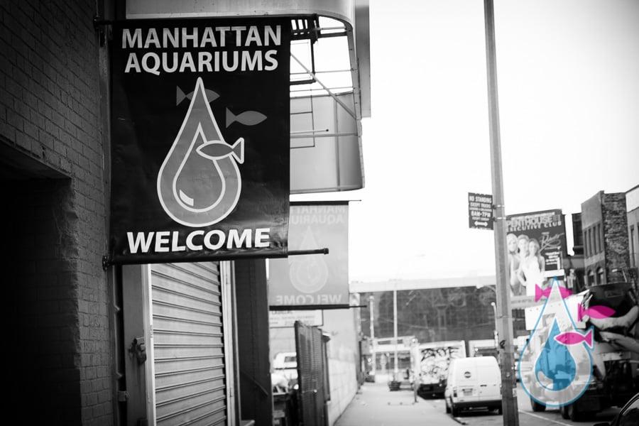 Manhattan Aquariums: 522 W 37th St, New York, NY