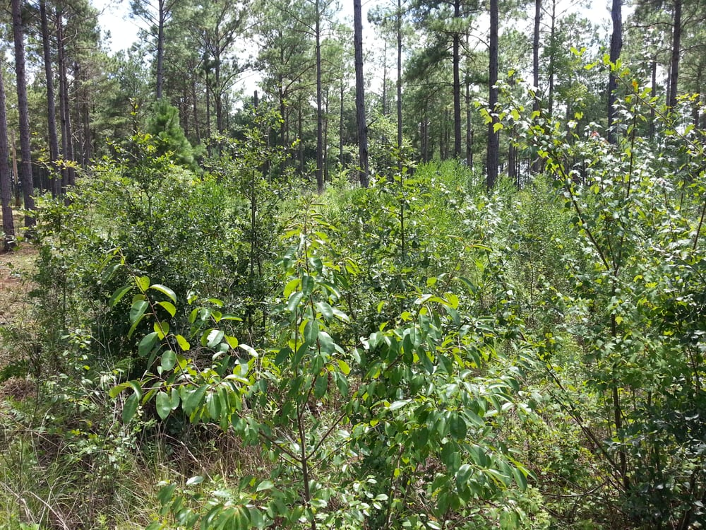 Jones Land Clearing Construction: Moultrie, GA