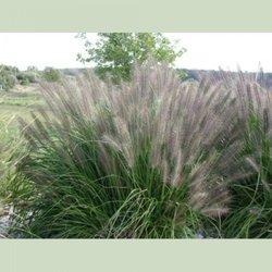 Photo Of Cold Stream Farm Free Soil Mi United States