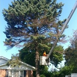 Photo Of Asap Tree Pros Rockford Il United States Pine Removal