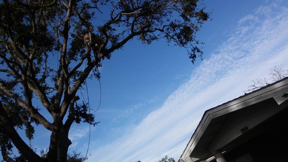 Matts Pro Arbor Care: 3232 Lanscam Ln, DeLand, FL