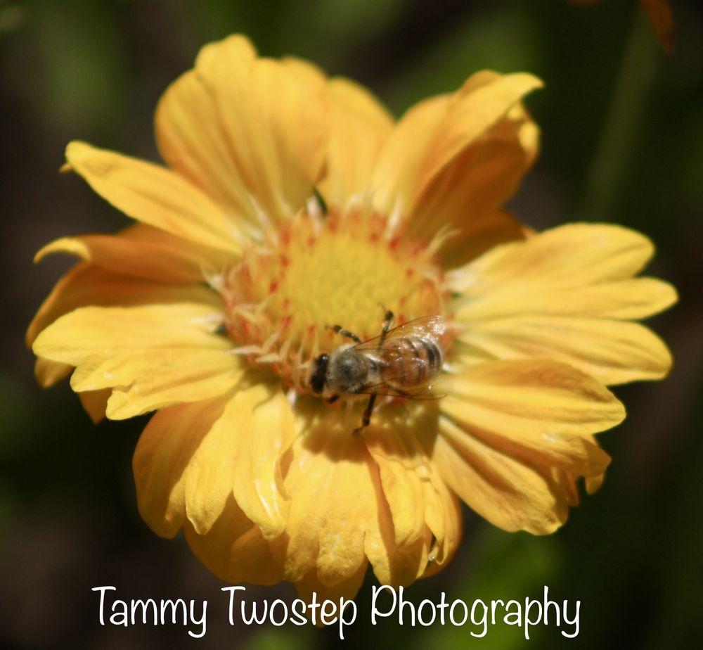 Hallberg Butterfly Gardens: 8687 Oak Grove Ave, Sebastopol, CA