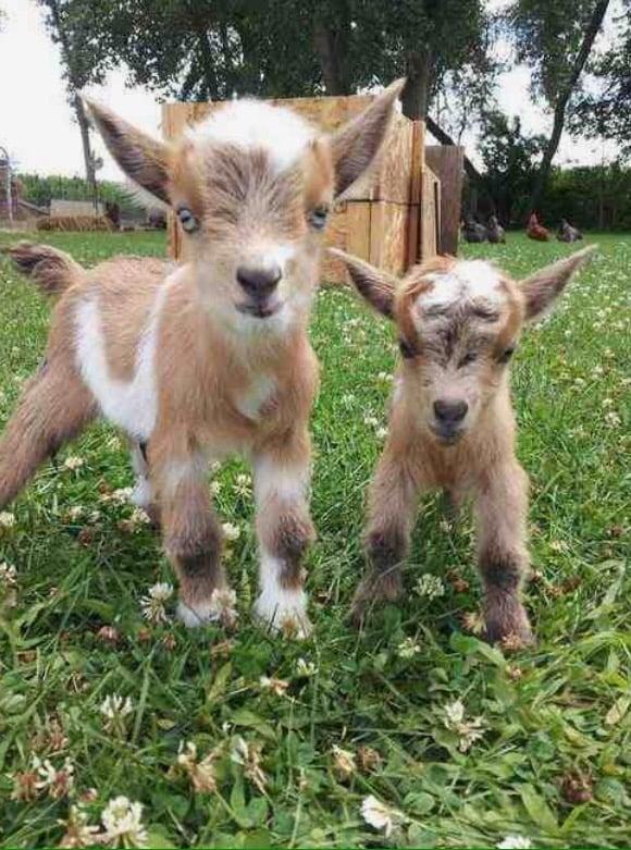 Meek Goat Milk Creations: Aguanga, CA