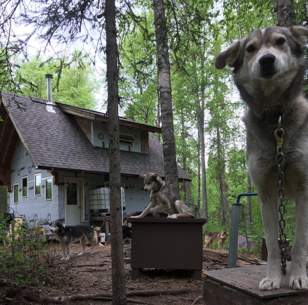 The Flower Kennel and Homestead LLC: S Howling Malamute St, Talkeetna, AK