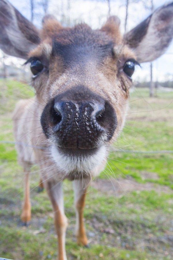 Alaska Wildlife Conservation Center: Mi Post 79 Seward Hwy, Girdwood, AK