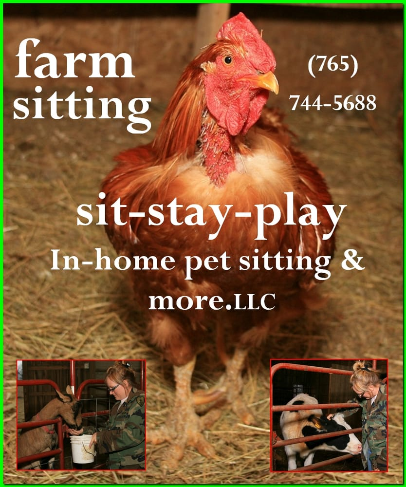 Sit-Stay-Play In-home Pet Sitting & More: Muncie, IN