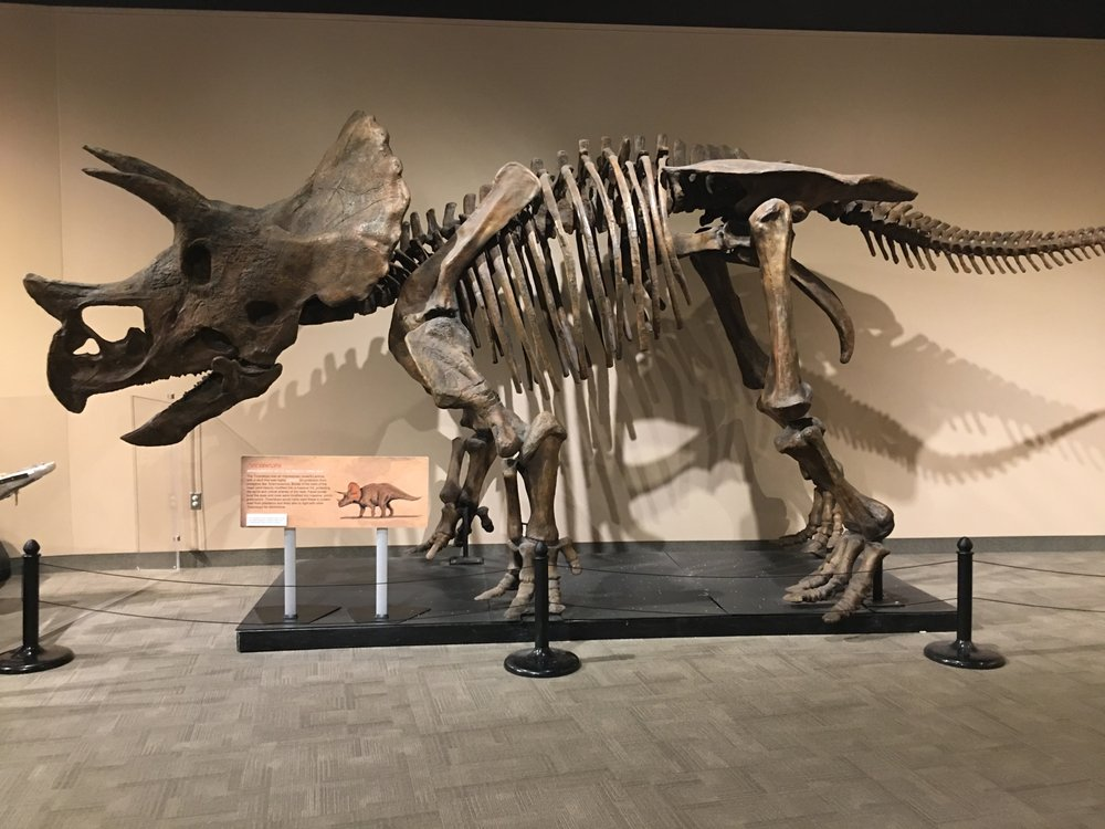Virginia Museum of Natural History: 21 Starling Ave, Martinsville, VA