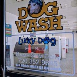 Lucky Dog Car Pet Wash 15 Photos 22 Reviews Car Wash 10003