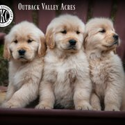 Outback Valley Acres - 34 Photos - Pet Breeders - Lisbon, OH