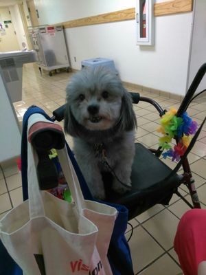 Animal Care Control Palm Beach County 7100 Belvedere Rd West Palm