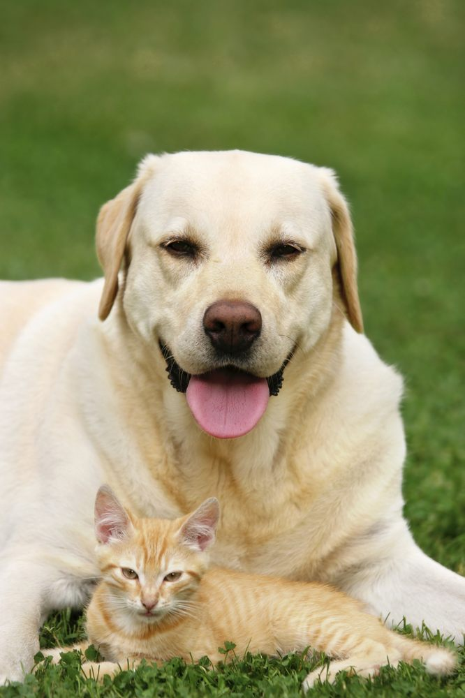 Long Island Pet & Home Sitters