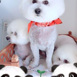 Happy Dog Grooming - 432 Photos & 40 Reviews - Pet Groomers