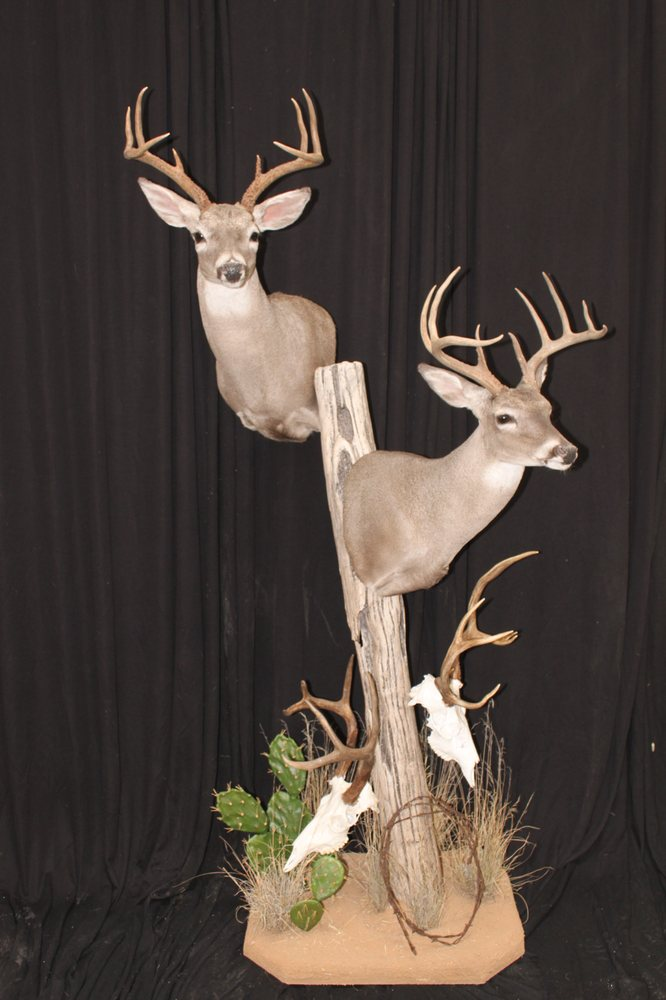 Southwest Wildlife Taxidermy: 16443 N 91st St, Scottsdale, AZ