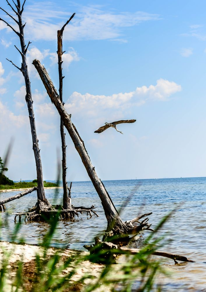 Gulf Island National Seashore: 1801 Gulf Breeze Pkwy, Gulf Breeze, FL