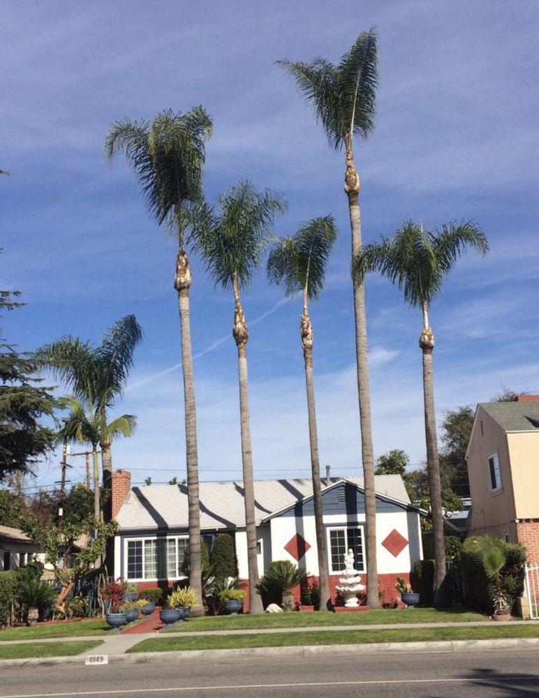 Green's Tree & Landscaping Care: 10340 Pinehurst Ave, South Gate, CA