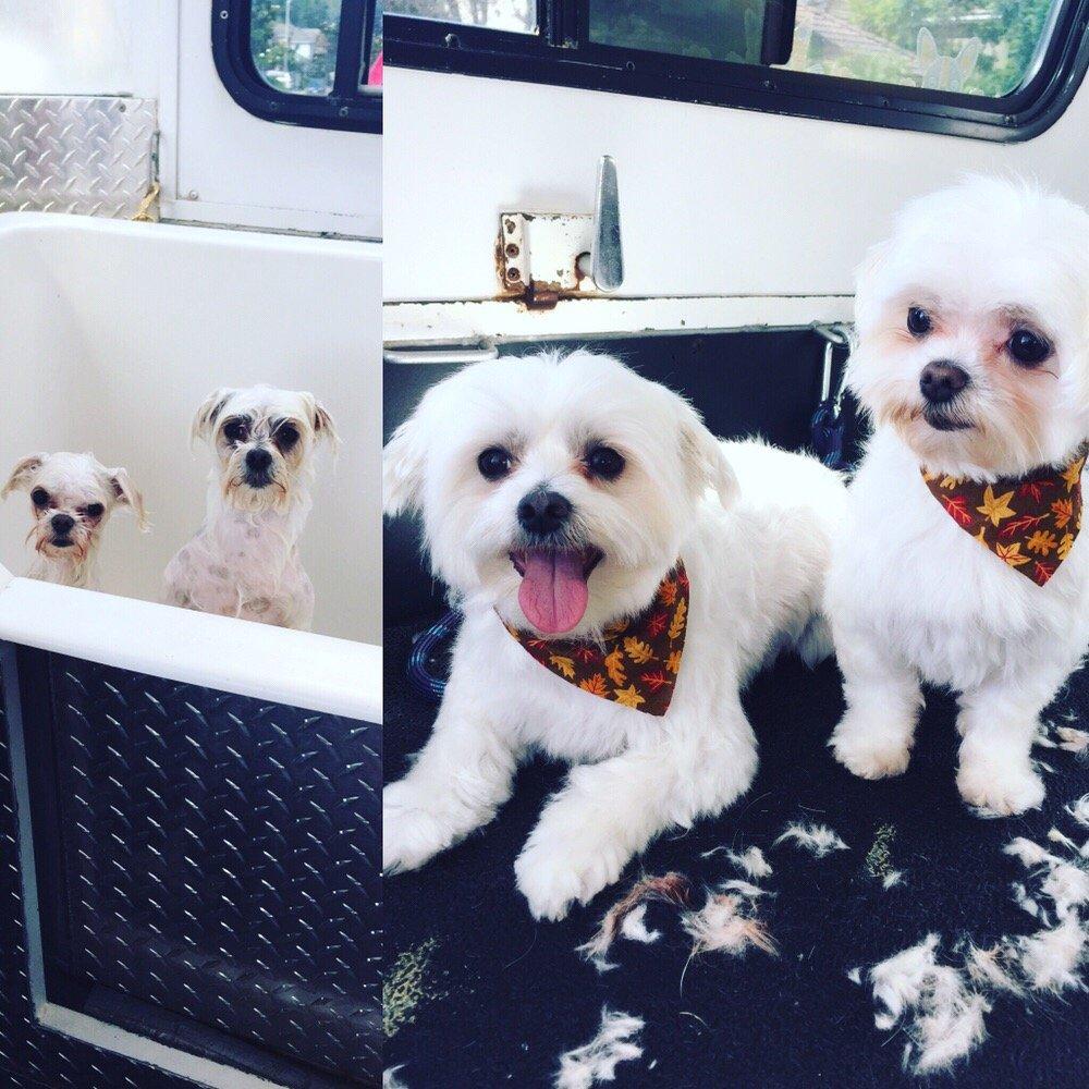Bubbles Mobile Pet Spa