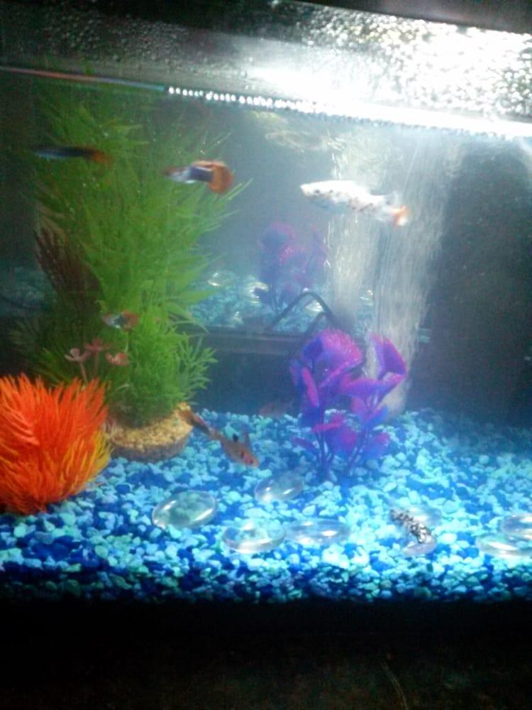 Fish city koi tropical fish 19 reviews local fish for Koi fish near me