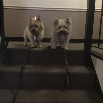 Annapolis Dog Walkers Reviews