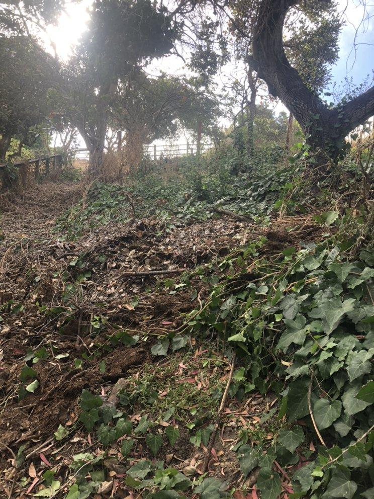 L&P hauling clean up landscape service: Corral de Tierra, CA