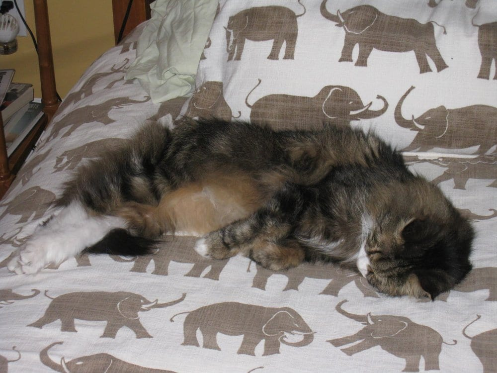 Cat Sitter Dc Reviews