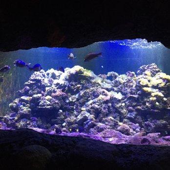 Photo Of The Virginia Aquarium Marine Science Center Beach Va United