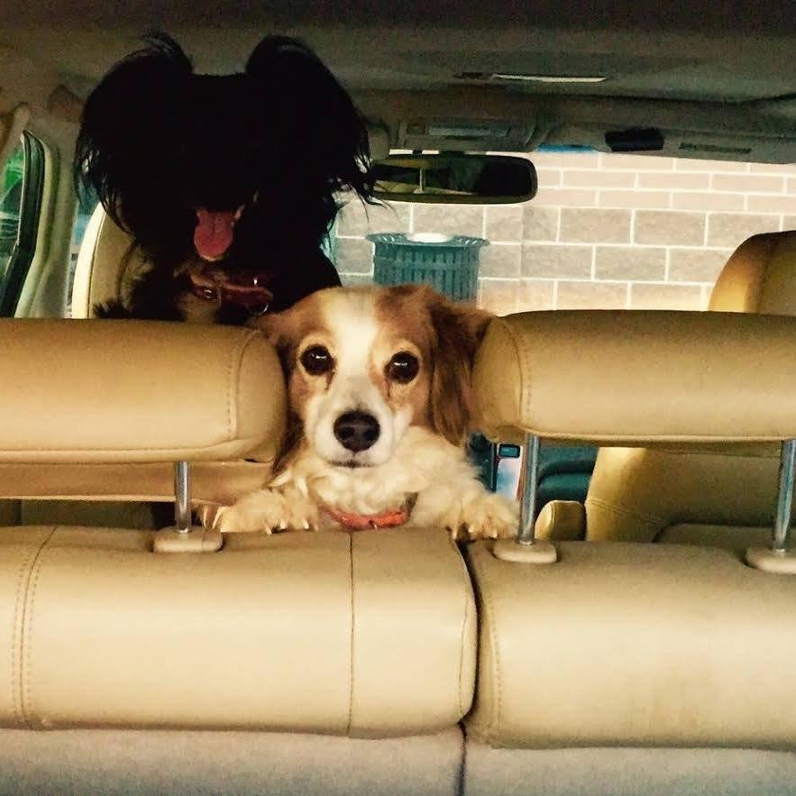 Paw Benders Dog Walking: Denver, CO