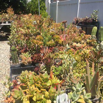 Photo Of Ventura Cactus And Succulents Ca United States